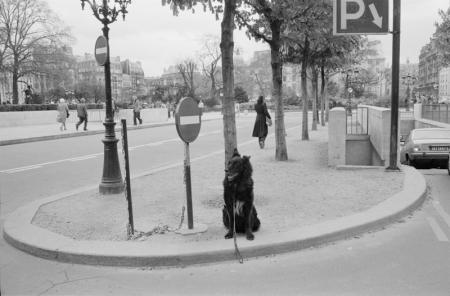 1979_Paris dog on leash.jpg