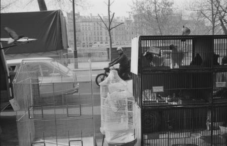 1979_Paris Man on scooter chickens.jpg